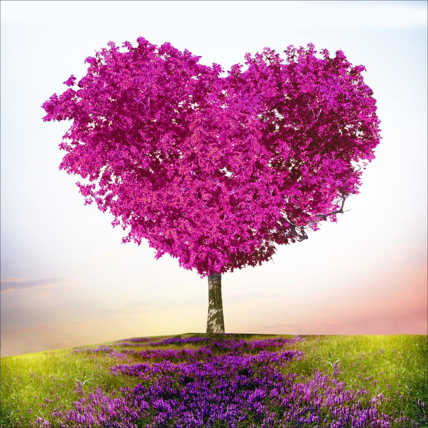 arbre violet