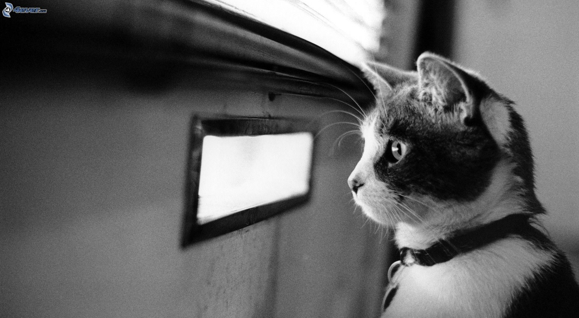 Chat for Fenetre noir et blanc