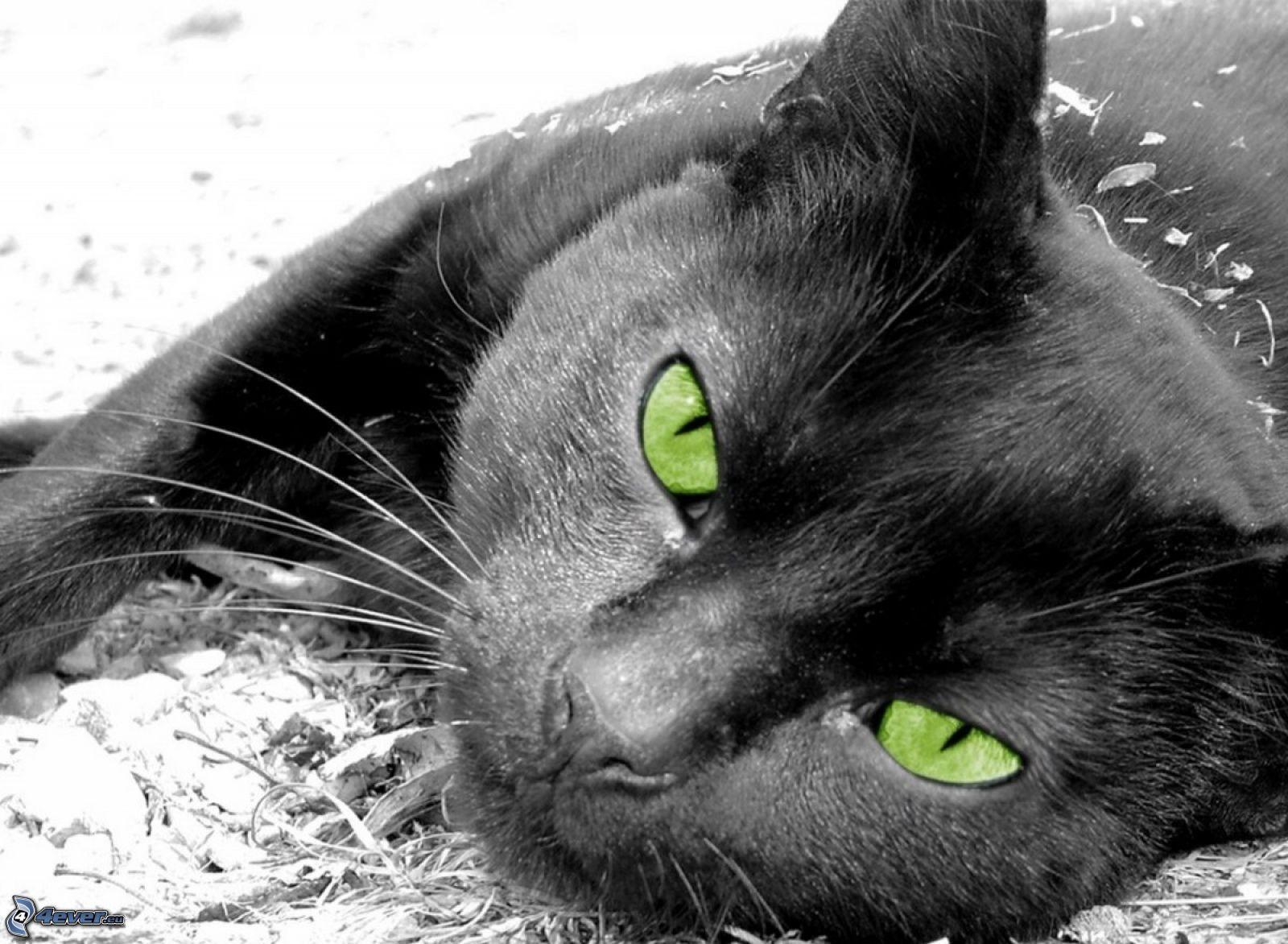 chats aux yeux verts. Black Bedroom Furniture Sets. Home Design Ideas