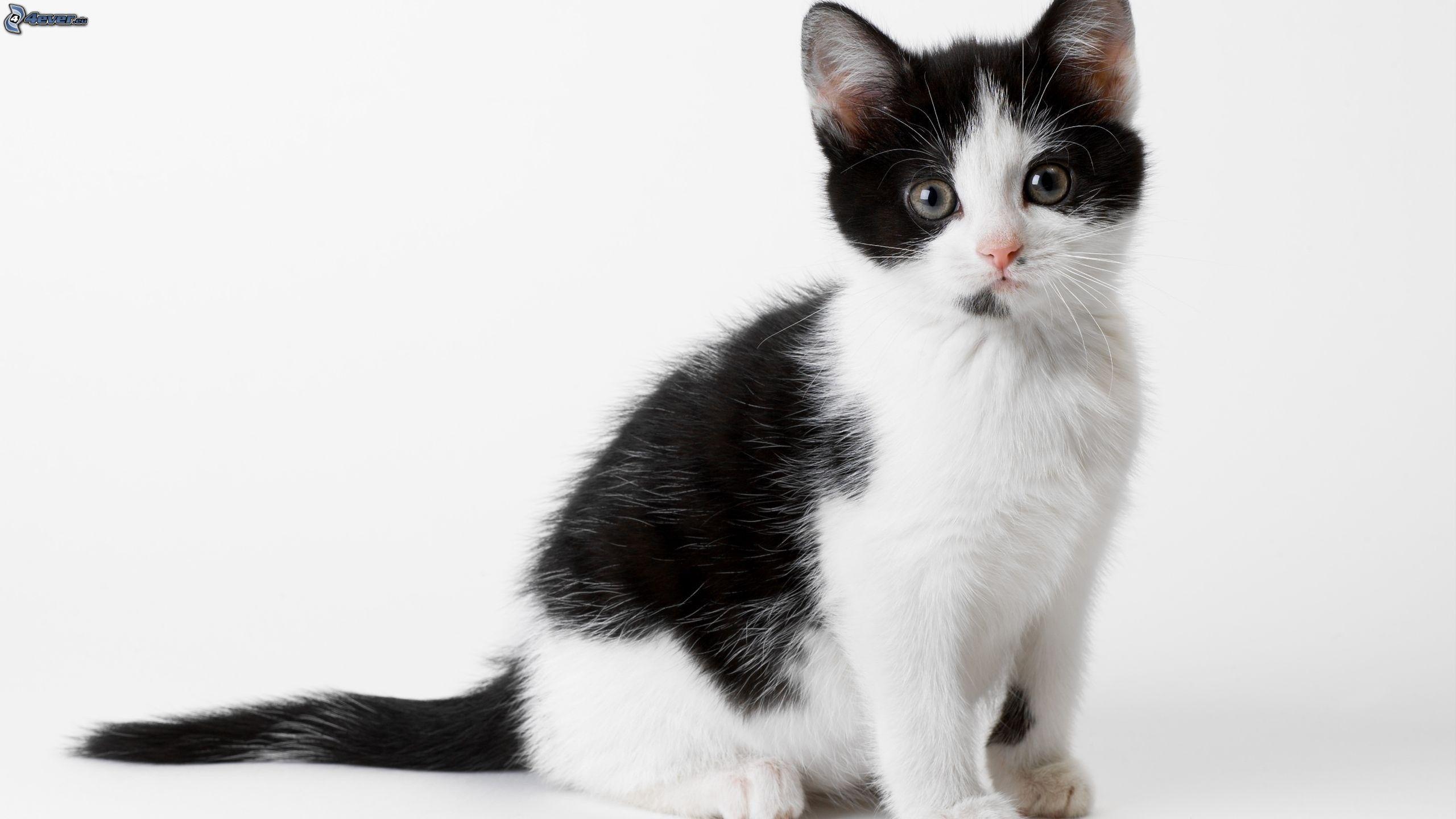 attrape le chat noir