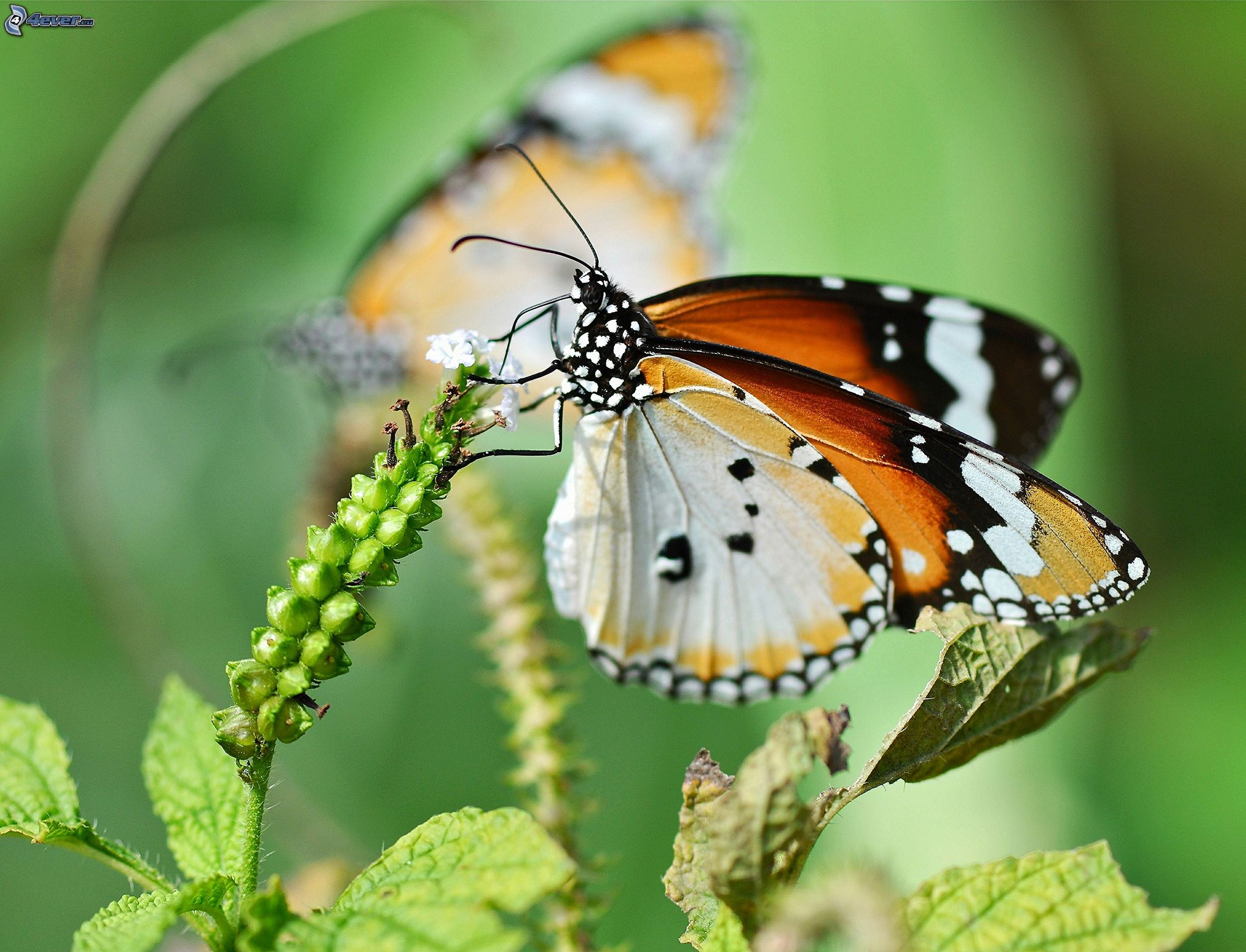 Papillon - Plantes pour papillons ...