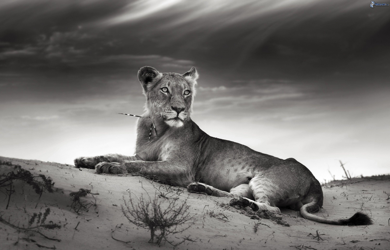 Super Lionne JZ17