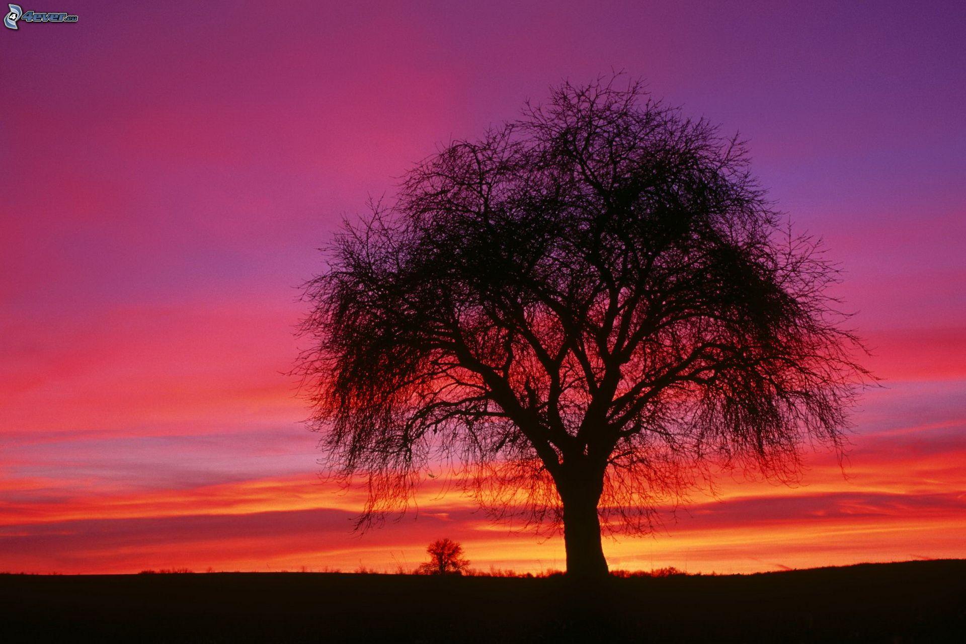 arbre solitaire aprs le coucher du soleil silhouette de larbre ciel violet - Arbre Ciel