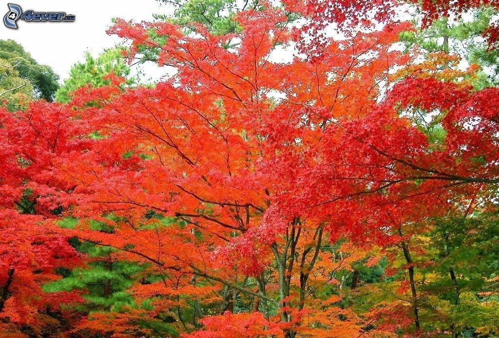 Arbres d 39 automne - Taille des rosiers automne ...