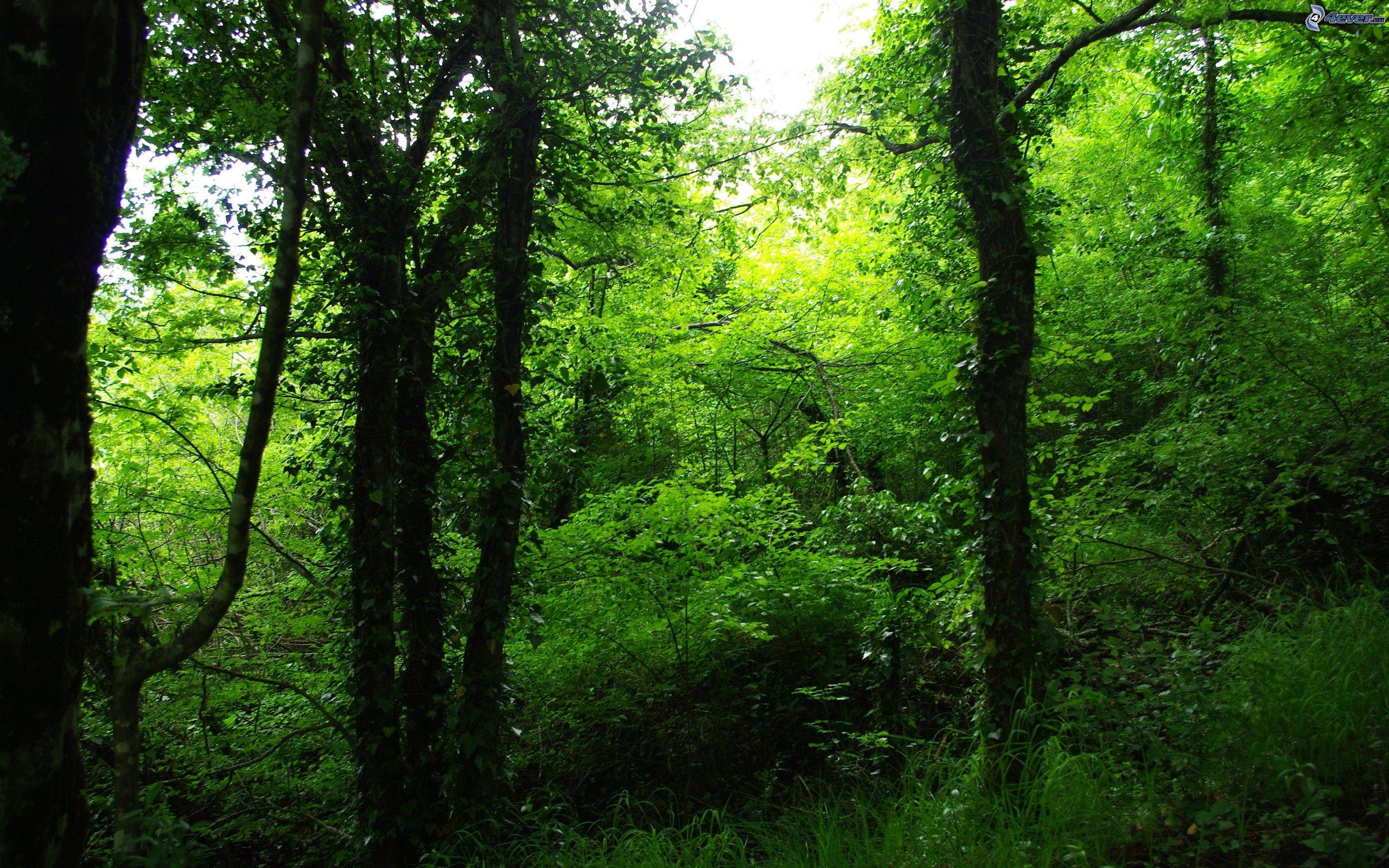 For t verte - Arbres a feuilles caduques ...