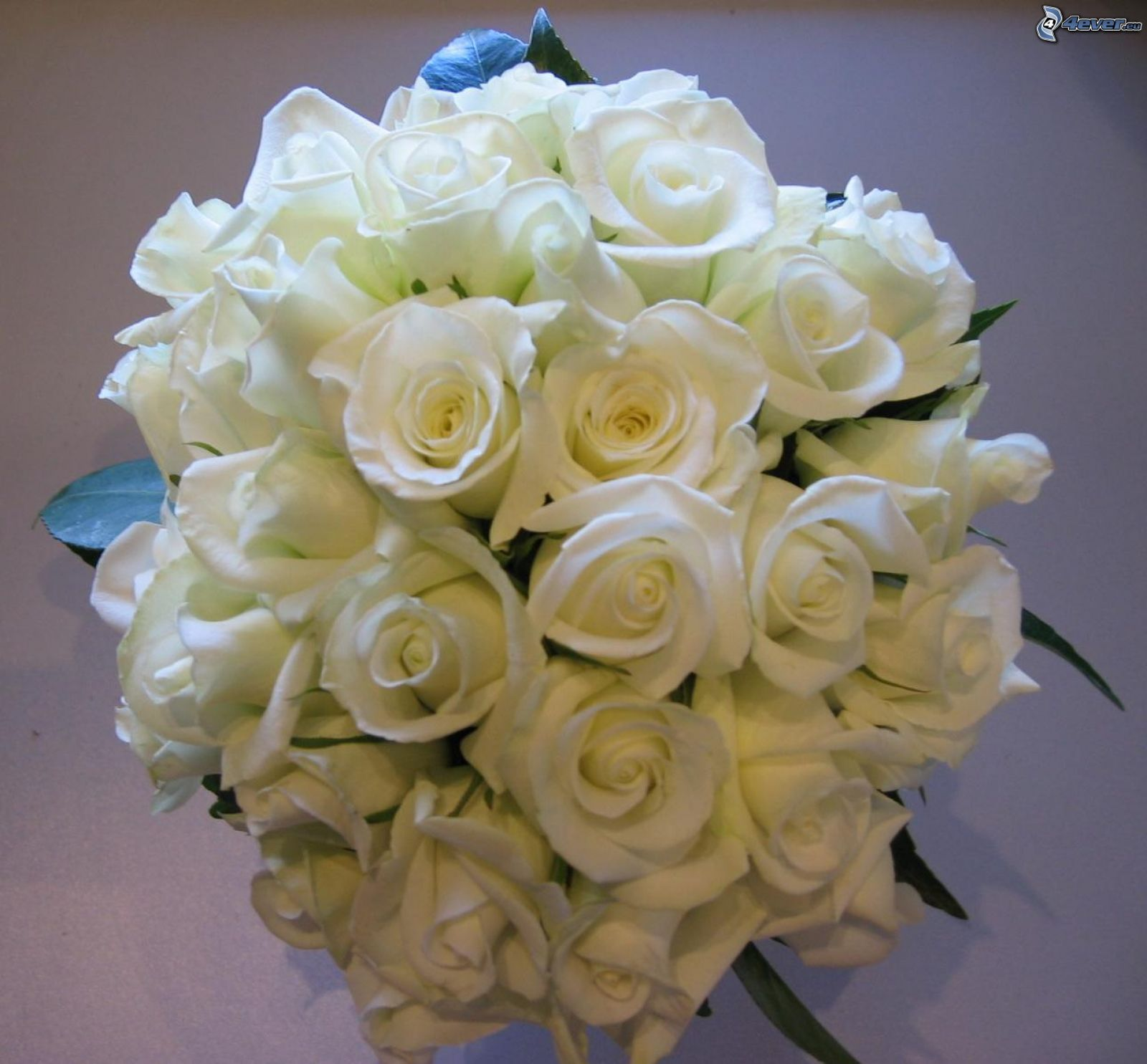 Roses blanches for Bouquet de roses blanches
