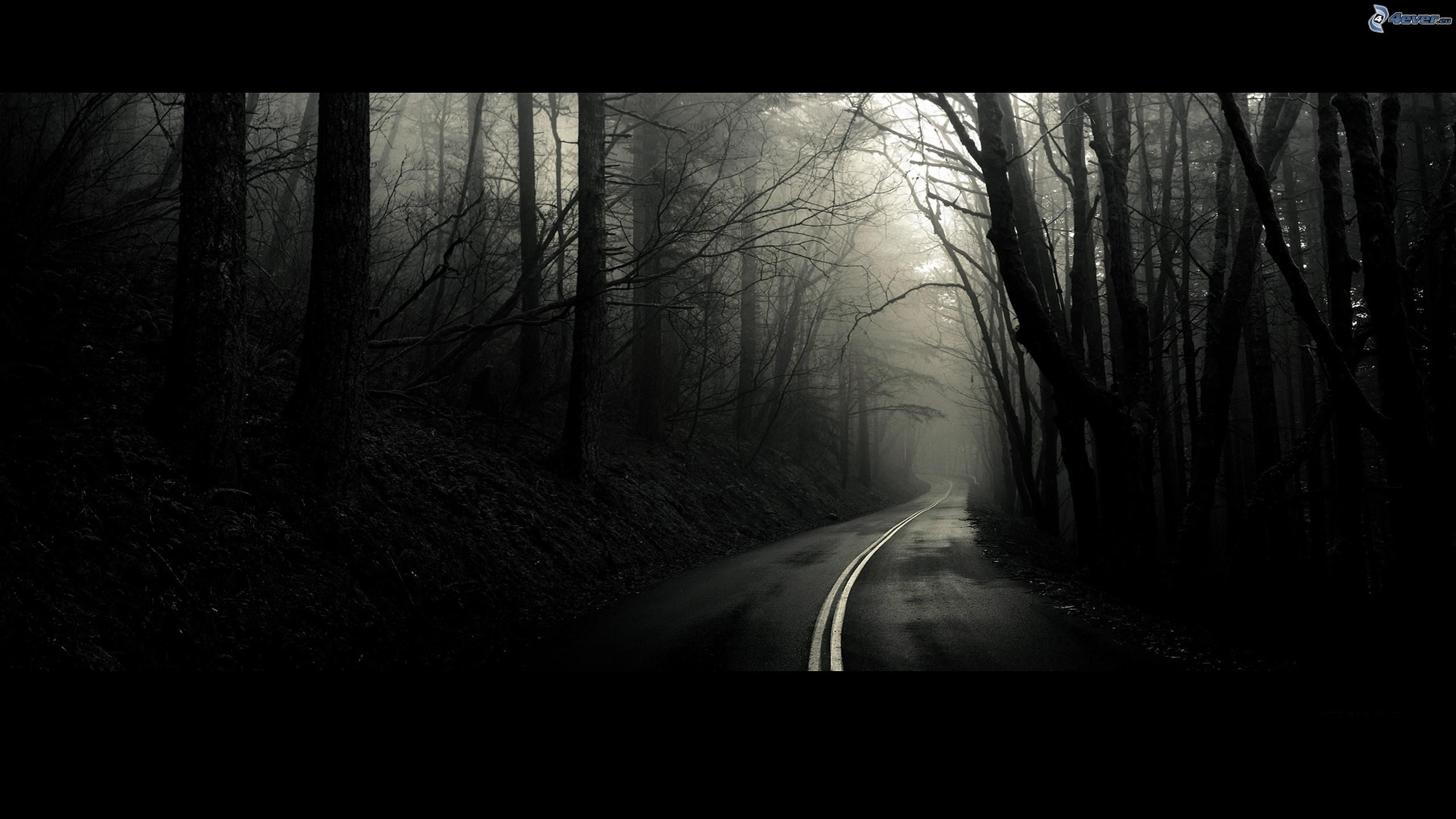 Route par la forêt