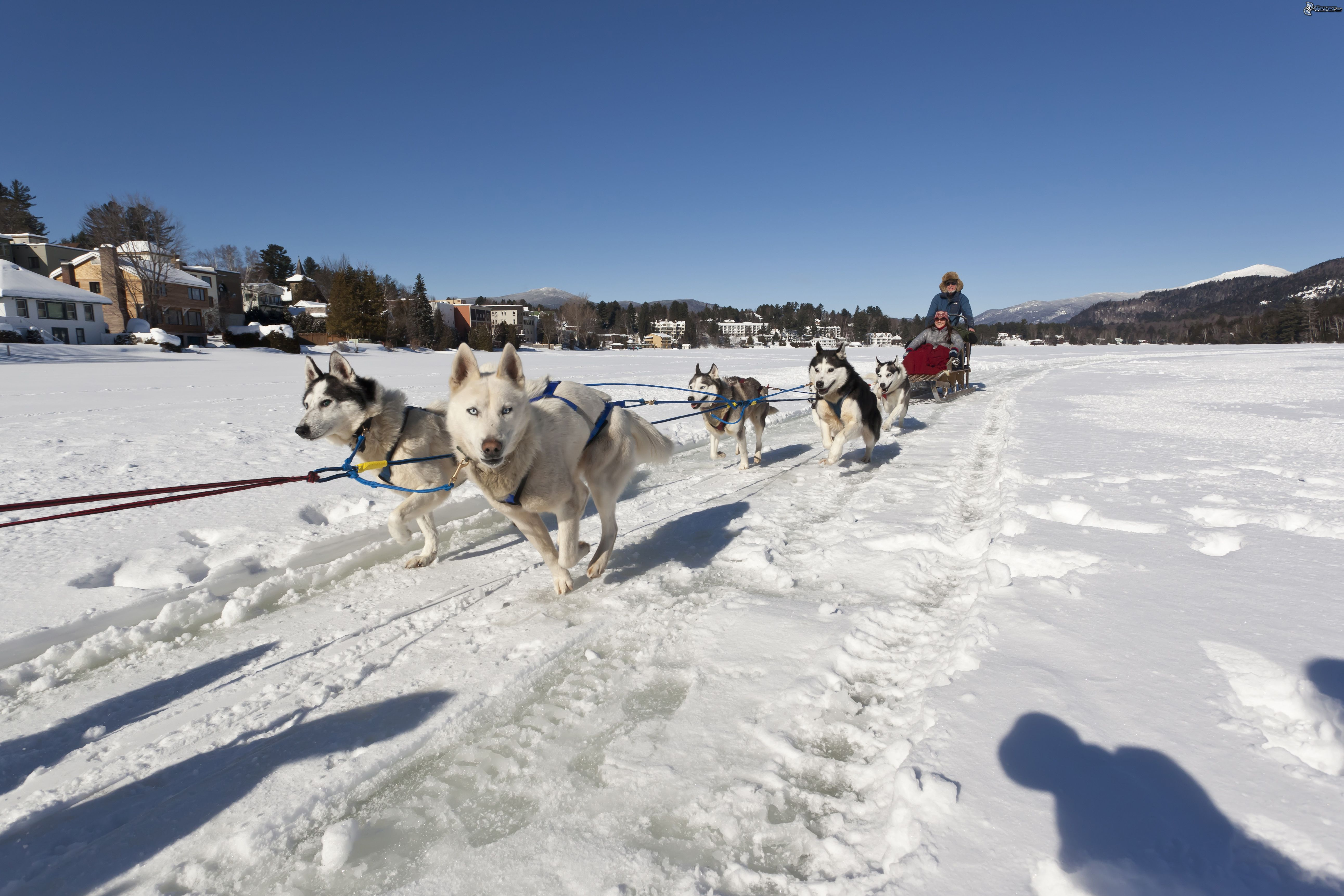 Tra neau chiens for Winter activities in nyc